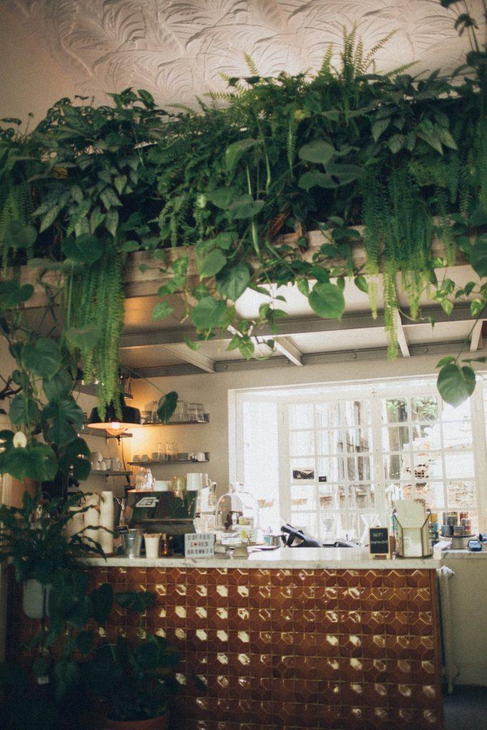 kitchen botanical plants